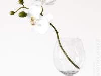 orkidee_vinglas